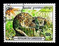 Geoffroyi del ` s Cat Oncifelis di Geoffroy, serie selvaggio dei gatti, circa 1996 Immagine Stock