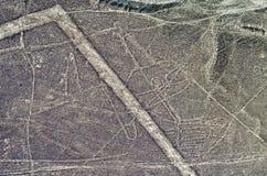 Geoglyphs和线在纳斯卡沙漠 秘鲁 免版税库存图片