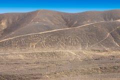 Geoglyphs do Peru de Palpa Nazca fotografia de stock royalty free