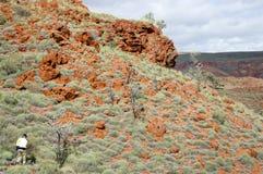 Geologe Prospecting für Eisenerz - Pilbara - Australien stockfotografie