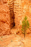 Geologia profonda in Bryce Canyon N P Fotografia Stock
