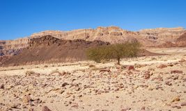 A geologia surpreendente do parque de Timna em Israel fotos de stock royalty free