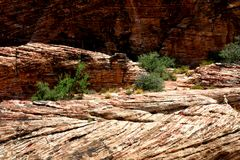 Geologic rock formations. Sparse vegetation growing in geologic rock formations Stock Photography