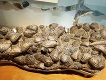 Geological eksponaty przy historii naturalnej Lo Muzealnym wykładowcą obraz stock