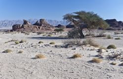 Geological formation in Timna park, Israel Royalty Free Stock Photography