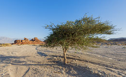 Geological formations in nature desert park of Timna, Israel Stock Photos