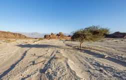 Geological formations in nature desert park of Timna, Israel Royalty Free Stock Photography