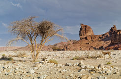 Geological formations in Timna park, Israel Stock Photo