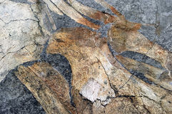 Geological fossil rock surface Royalty Free Stock Image