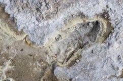 Geological Organic Texture Stock Image