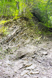 Geological strata in the forest Stock Photo
