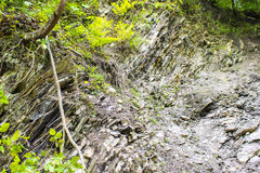 Geological strata in the forest Royalty Free Stock Images