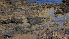Geologie - Sedimentgestein-Kompressions-Zutageliegen stock footage