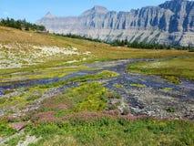 geologische Bildung Stromes 4k Rocky Mountain mit Blumen im Sommer Stockbilder