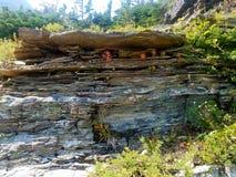 geologische Bildung Stromes 4k Rocky Mountain mit Blumen im Sommer Stockbild