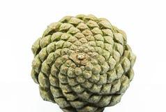 Geometría del cono del pino Fotografía de archivo