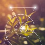 geometria święta Mathematics, natura i duchowość w naturze, Formuła natura ilustracja wektor
