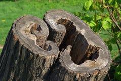 Geometria de madeira extravagante foto de stock royalty free