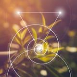 Geometria sagrado Matemática, natureza, e espiritualidade na natureza A fórmula da natureza Imagens de Stock Royalty Free