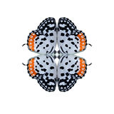 Geometric butterfly shape isolate on white background.  stock image