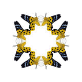 Geometric butterfly shape isolate on white background.  royalty free stock images