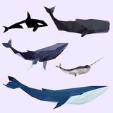 Geometric colored whale set Royalty Free Stock Images