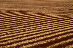 Geometric crop lines. Lines of agricultural crops formed over sloping fields Stock Images