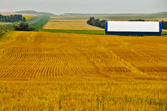 Geometric Design in Golden Wheat Fields Stock Images