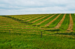 Geometric Design in Harvested Field. Alternating green and gold colored geometric design in harvested field.  Horizontal.  Copy space Stock Image
