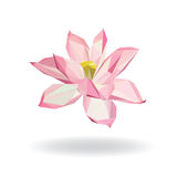 Geometric Floral Water Lily Lotus Elements for design Royalty Free Stock Images