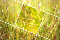 Geometric grass abstract background with triangles and lines. Stock Images