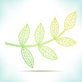 Geometric leaf. Royalty Free Stock Photo