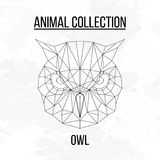 Geometric owl head Royalty Free Stock Image