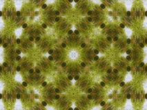 Geometric pattern background of green grass Stock Photography