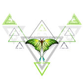 Geometric pattern with green butterfly Royalty Free Stock Photo