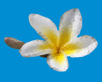 Geometric Plumeria flower Stock Photography