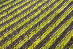 Geometric rows of vines on hill. Geometric rows of vines on a hill Stock Photo