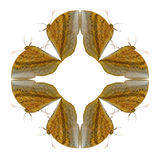 Geometric shapes of butterfly on white background look like harm Royalty Free Stock Images