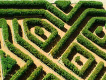 Geometrical garden. Ornamental garden with hedges of  buxus sempervirens as a labyrinth Royalty Free Stock Images