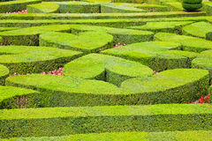 Geometrical hedges Royalty Free Stock Photos