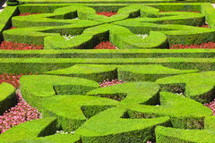 Geometrical hedges Royalty Free Stock Photography