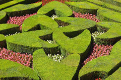 Geometrical hedges Royalty Free Stock Photo