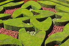 Geometrical hedges Royalty Free Stock Photo