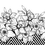 Geometrical seamless border painting with hand drown Narcissus. royalty free stock images