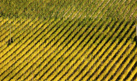 Geometrical vineyard Royalty Free Stock Images