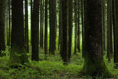 Geometrische Bäume Lizenzfreie Stockfotografie