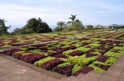 Geometrische Formen an botanischen Gärten Jardim Botanico Madeiras Stockfotografie