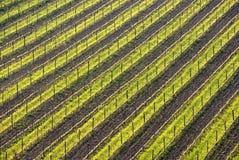 Geometrische rijen van wijnstokken op heuvel Stock Foto
