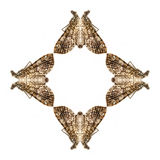 Geometrisches Schmetterlingsformisolat auf weißem Hintergrund Stockfotografie