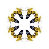 Geometrisches Schmetterlingsformisolat auf weißem Hintergrund Lizenzfreies Stockbild